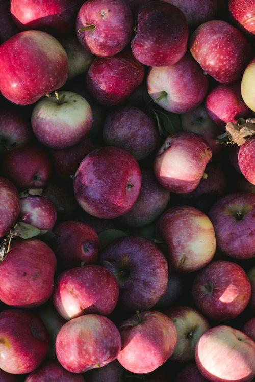 Pommes Lobo et Paula Red